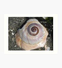 Pastel Shell Art Print