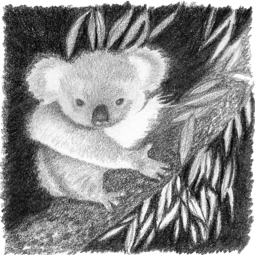 """Koala at Night Pencil Sketch"" by Jane McDougall 