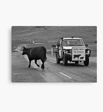 Stock.....that would be me! Canvas Print