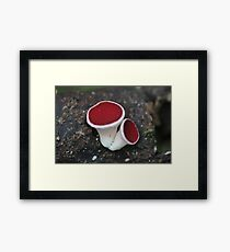 Red Cup Framed Print