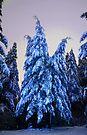 Ice Blue Winter by Tori Snow