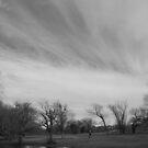 Clouds, Trees, A Pond, The Disc Golf Course by Jeffery W. Turner