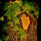 Natures own Valentine (wooden heart) by Alan Mattison