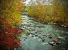 Perkiomen Creek in Autumn by MotherNature