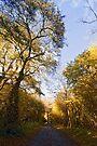Autumn Forest Walk by Nigel Bangert