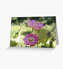 Lotus in full bloom Greeting Card