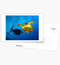 Dancing With Sea Turtles Postcards