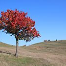 An Autumn Tree in Barda, Romania by Dennis Melling