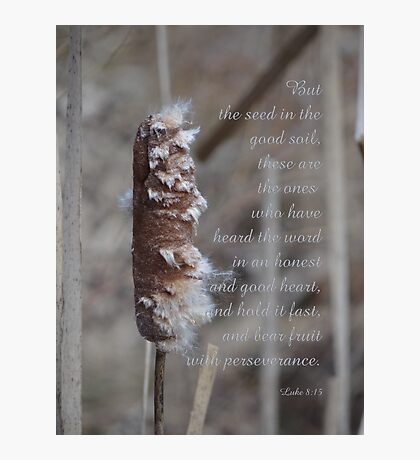 the seed in good soil (for sarnia2) Photographic Print