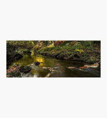 West Beck, Gothland, North Yorkshire Photographic Print
