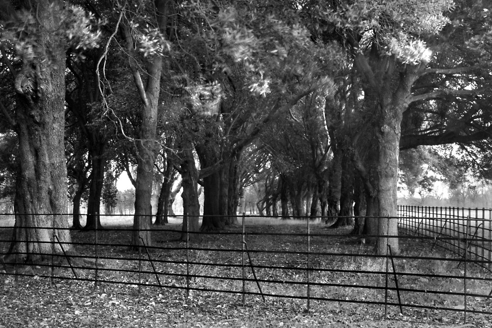 Trees Near The Visitor Centre, Phoenix Park, Dublin by Dave  Kennedy
