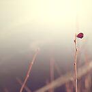 Sweet dreams by Elda
