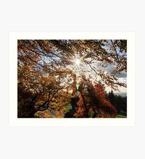 Fall in BC Art Print