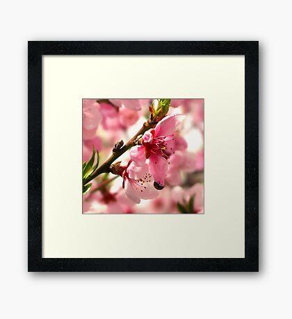 Lady Bug Pink Framed Print