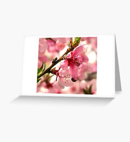 Lady Bug Pink Greeting Card