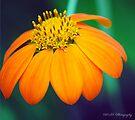 Brilliant Orange Flower by William Martin