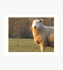 A sheep and 4 lapwing Art Print