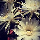 White Cactus Flowers by Douglas E.  Welch