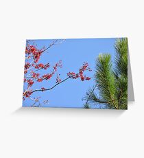 Red Blue Green Greeting Card