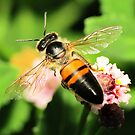 Bee Wings by Toni Kane
