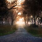 Country Lane by David Haworth