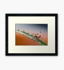 Redback Framed Print