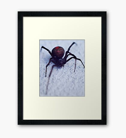 Redback Close Up Framed Print