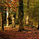 Autumn at Stover Country Park by Jay Lethbridge