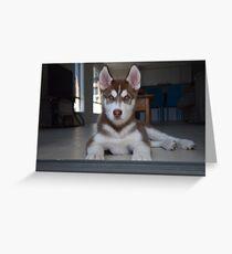 Jax- Cute husky malamute puppy Greeting Card