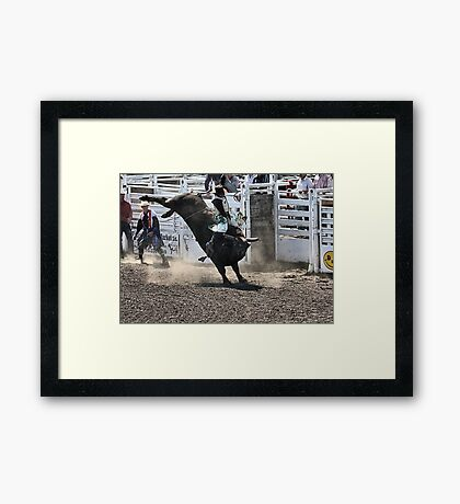 No Bull About It Framed Print