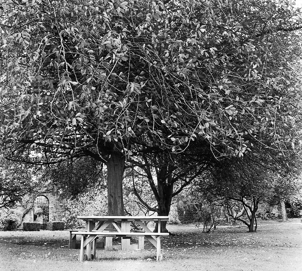 Bench in Farmleigh, Phoenix Park, Dublin by Dave  Kennedy