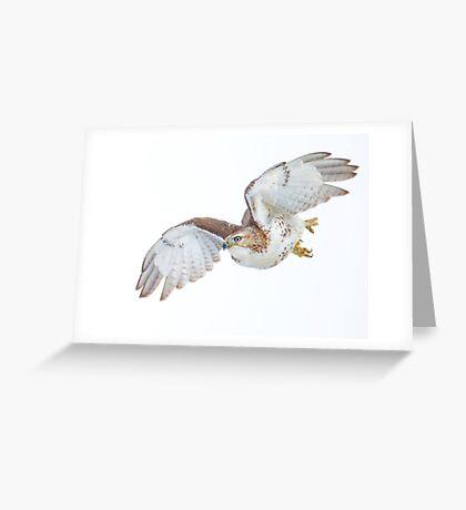 Hawk on white Greeting Card