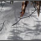 Beech Leaves in Winter by Wayne King