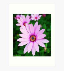 Violet daisy Art Print