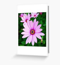 Violet daisy Greeting Card