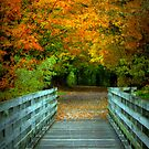Into the Woods:  Virginia Creeper Trail by Cecilia Carr