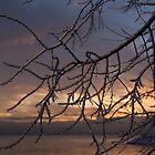 A Sunrise Through Icy Branches by Georgia Mizuleva