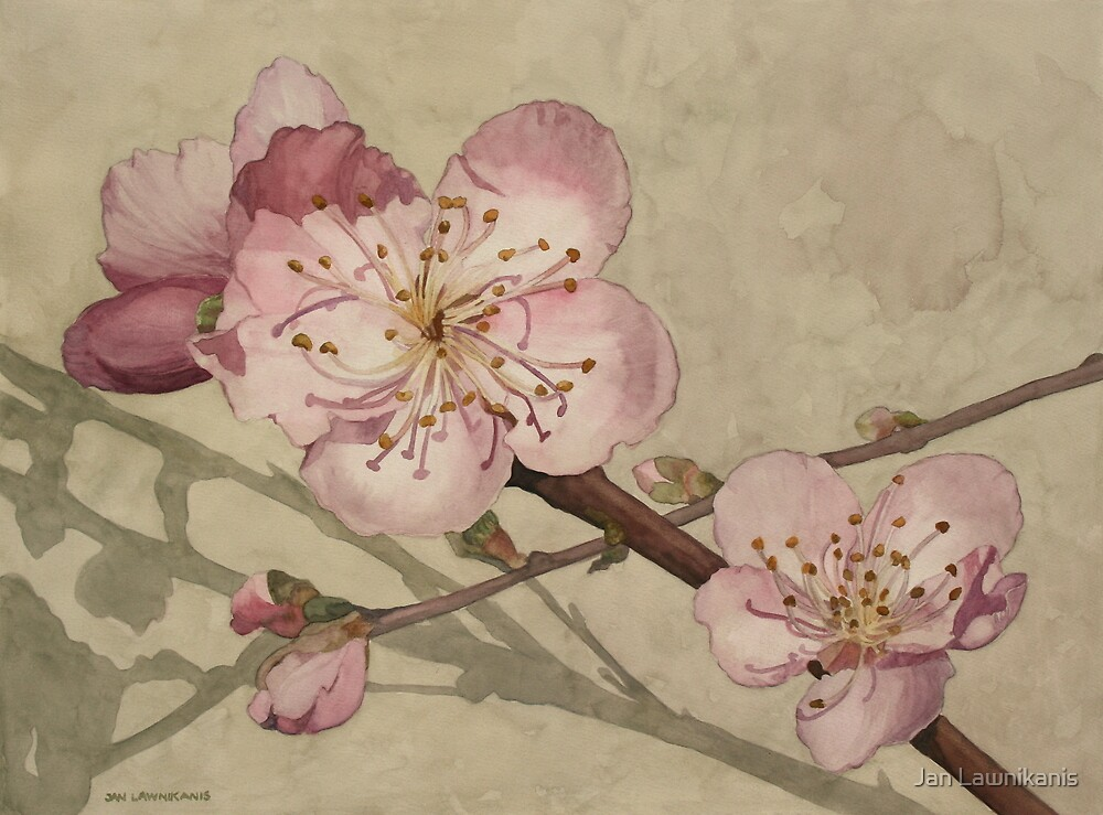 Peach Blossoms by Jan Lawnikanis
