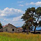 Derelict farmhouse, Cardinia swamp, Gippsland, Victoria. by johnrf