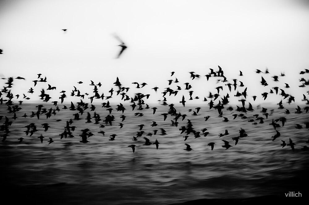 Flockr by villich