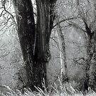 A Frost Effect ! by Jan Siemucha