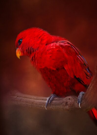 Red Parrot by KarenM