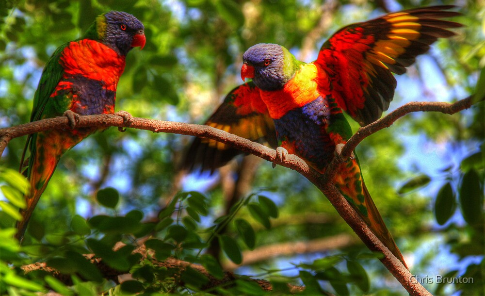 Beautiful pair by Chris Brunton