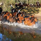 Horse muster by Chris Brunton