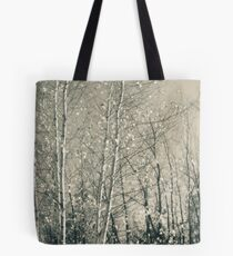Birch in Afternoon - Lou Campbell State Nature Preserve Tote Bag