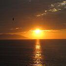 Golden Sunset with Bird - Puesta del Sol Dorada con Ave by PtoVallartaMex