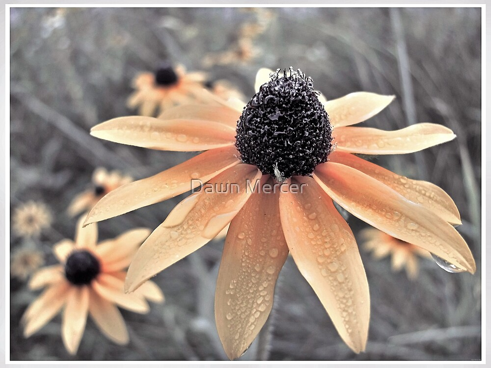 Wildflowers Of Ontario by MissDawnM