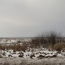 Winter in the fields by Maria1606