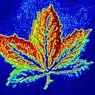 Abstract Leaf by ©The Creative  Minds