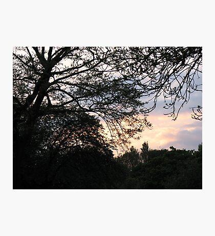 Last Rays - West Park Sunset Fotodruck